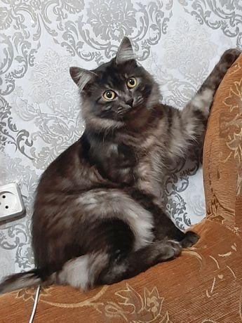Потерялся кот, бобтейл