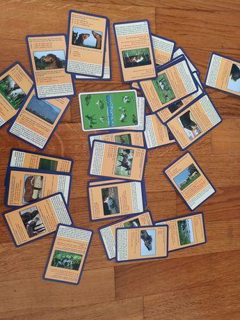 32 carti cu informații despre cai în germana