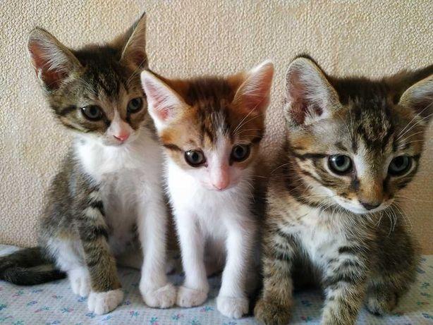 Котята ( девочки)