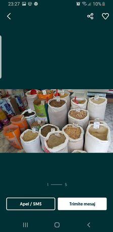 Cereale furaje grau porumb ora sorg