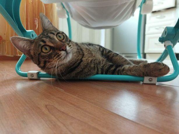 Мэйсон - котенок, 8 месяцев, кастрат, ищет семью! Кто кошка котята