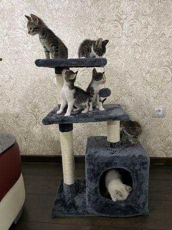 Donez pisici dragute
