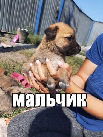 Отдам крупных толстеньких щенят в добрые руки!