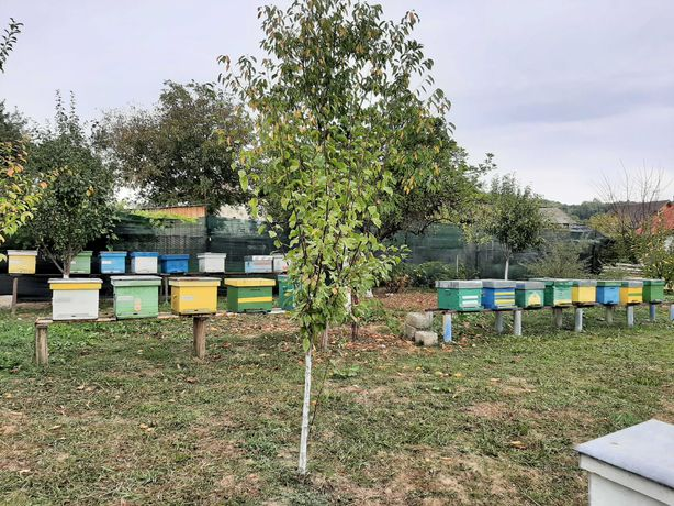 Vând stupi / familii de albine