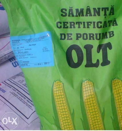 Samanta Porumb OLT Certificata