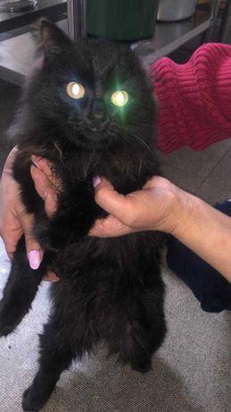 Черный кот, даром