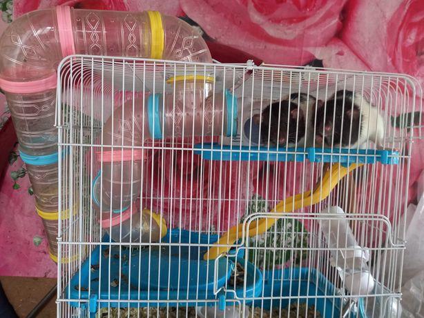 Продаю крыс ручных клетка в комплекте и опилки