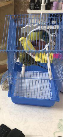Продам 2 попугая