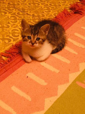 Котенок!