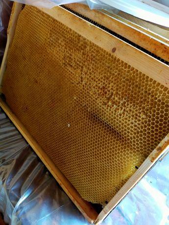 Мед в сотах, перга, пыльца, воск пчелиный