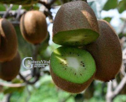 Kiwi sau agris chinezesc