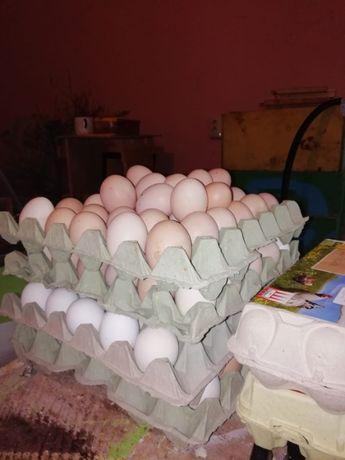 Oua pentru consum