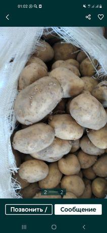 Продам картофель и лук на хранение с бесплатной доставкой !!!