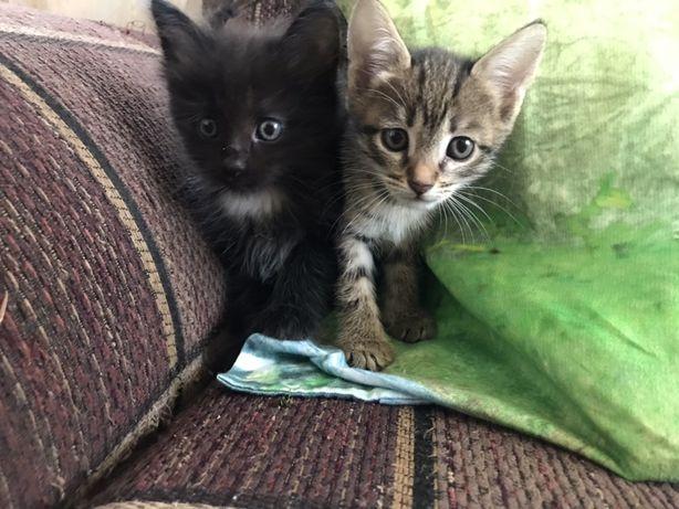 Котята! Отдам котят!