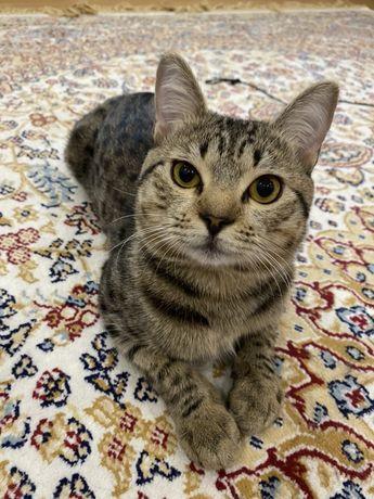 Кот.котенок