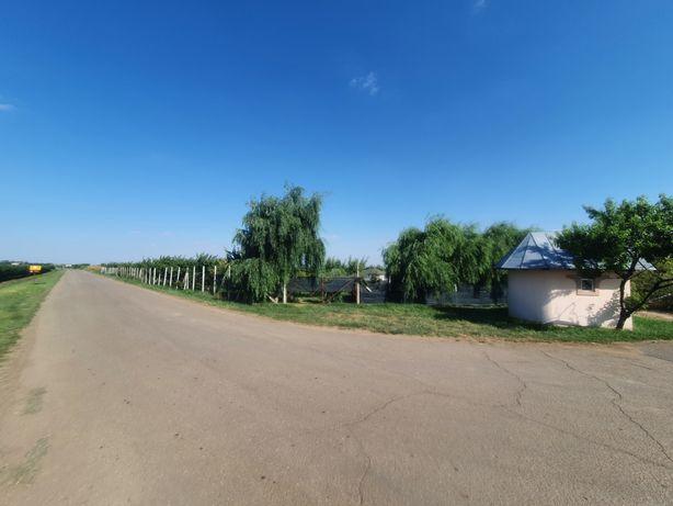 Livada plantație Caisi din 2014, 10000 mp , 600 pomi