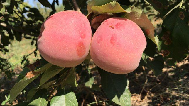 Vand mere diferite soiuri