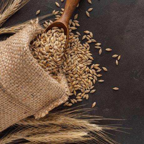 Пшеница продаётся 99 тг