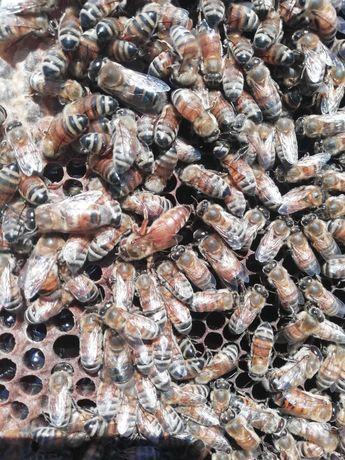 Oferim consultanță în apicultura