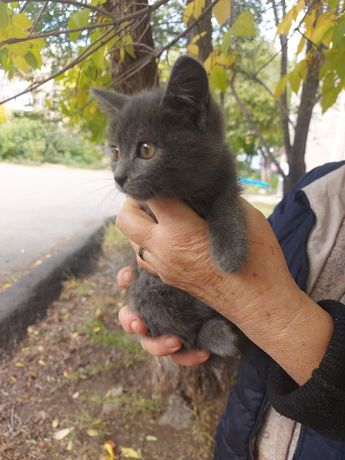 Котята котики котейки