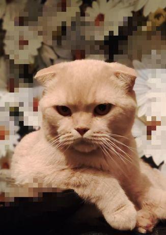 Меня зовут красавчик- Персиваль! Я кастрированный и породистый котейка