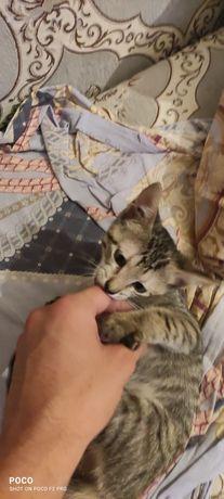 Котенок (девочка) в добрые руки