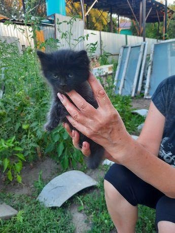 Отдам котят в добрые руки, есть мальчик и девочка оба чёрного цвета