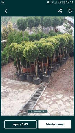 Piatra naturală si plante ornamentale