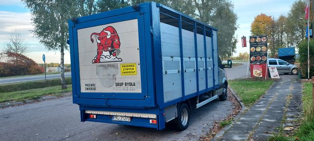 Mercedes sprinter 519 518 413 iveco daily transport animale