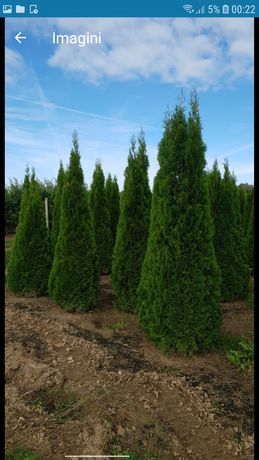 Vă oferim o gama foarte mare de plante ornamentale gazon rulou etc