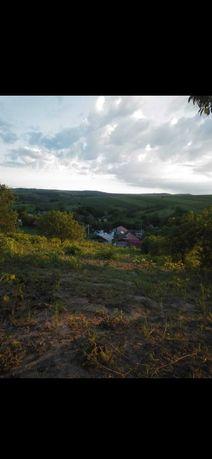Pământ și casă bătrânescă Delești