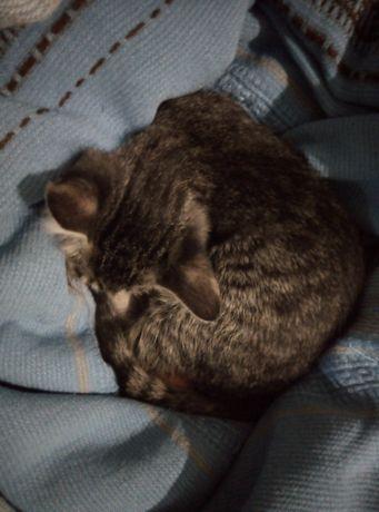 Маргаулар кыз 3 ай адеми акылды котенок девочка