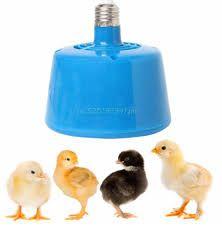 лампа для обогрева цыплят