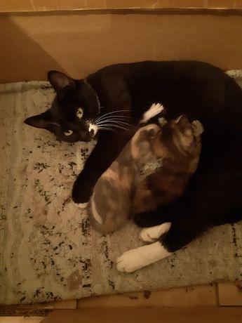 Кошка с 2 котятами в добрые руки