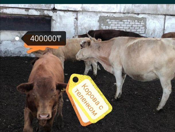 Корова с телятами