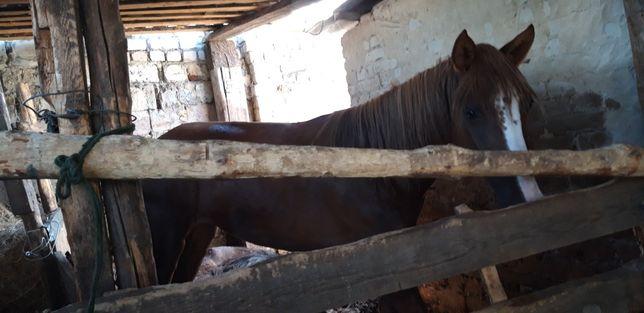 Лошади с откорма в зотоболовке