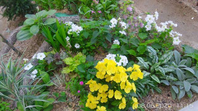 Саженцы цветов и кустарников