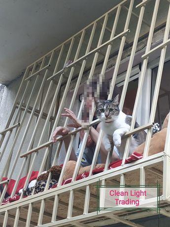 Cusca pisici