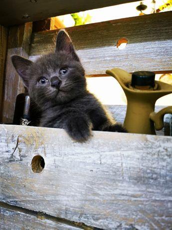 Очень милые котятки
