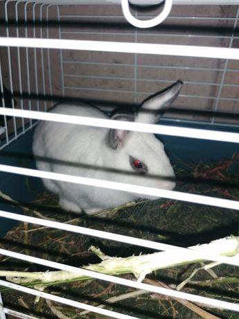Кролик ручной с клеткой
