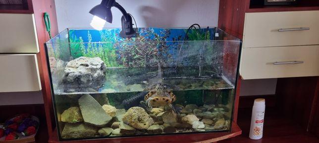 Broasca țestoasă plus acvariu 100 l