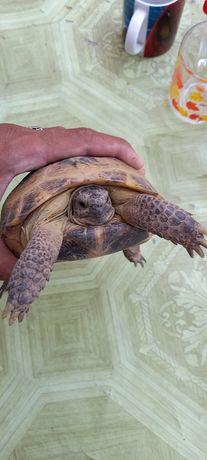 Черепахи. Тасбақалар