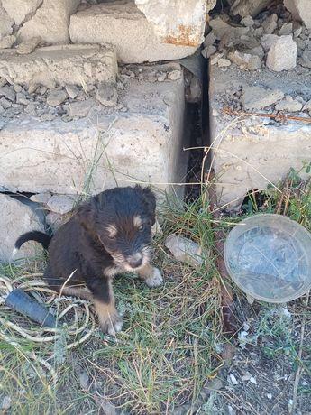 Щенята в Аксу, возраст один месяц