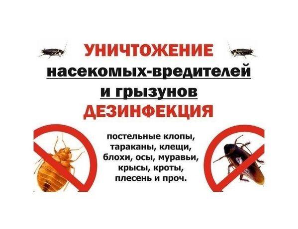 Уничтожение клещей,клопов,тараканов,муравьев,крыс,мух! ДЕЗИНФЕКЦИЯ