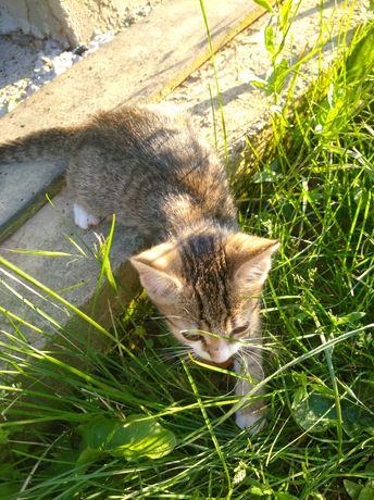 Dau pisici spre adopție