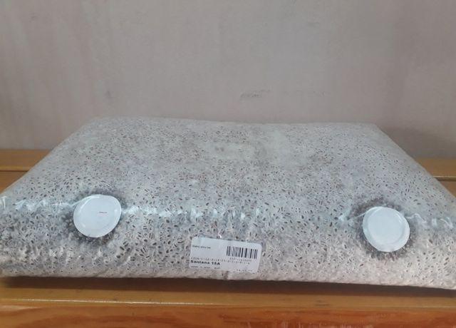 Мицелий шампиньона компания Сантана Российский выращивание шампиньонов