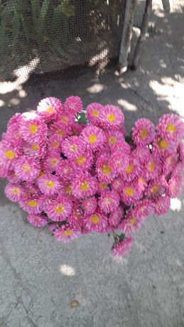 Цветы садовые астра для букетов