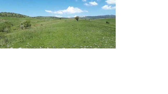 Земля 21 гектаров (целевое КХ)