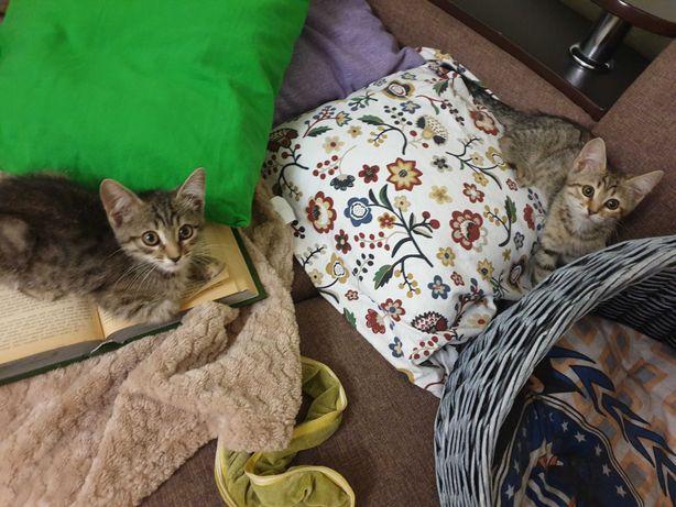 Домашние котята в добрые руки
