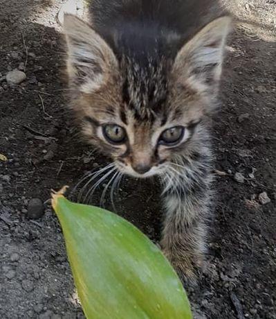 Отдам котёнка в хорошие руки. Игривый, шустрый , красивый котёнок,ждёт
